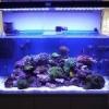 Aquarium eau de mer - dernier message par toydarien